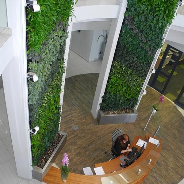 Vicinity Living Green Wall